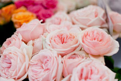Färgrika härliga rosor blommar bakgrund för makrocloseupkortet fotografering för bildbyråer