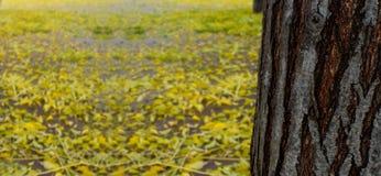 FÄRGRIKA HÖSTBAKGRUNDER GULA SIDOR FALLER FRÅN TRÄD FÖR ATT GRUNDA EFTER RAINNING arkivfoton