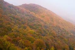 Färgrika höstsidor i skogen arkivbilder