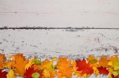 Färgrika höstsidor på en bakgrund av den gamla målade ljusa boaen royaltyfri foto
