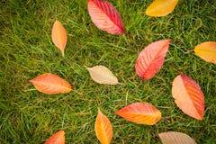 Färgrika höstsidor på grönt gräs & x28; lawn& x29; - bästa sikt arkivfoto