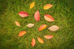 Färgrika höstsidor på grönt gräs & x28; lawn& x29; - bästa sikt royaltyfri fotografi