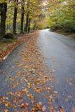 Färgrika höstträd på en slingrig väg Arkivbild