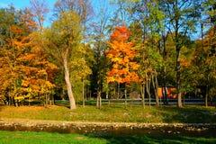 Färgrika höstträd vid floden Arkivbilder