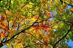 Färgrika höstträdsidor i en skog Arkivbild