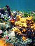 färgrika havssvampar Arkivbilder