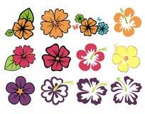 färgrika hibiskusar vektor illustrationer