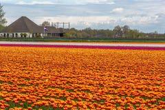 Färgrika Holland Arkivbilder