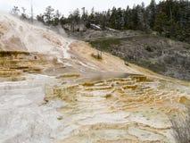 Färgrika Hot Springs terrasser i den Yellowstone nationalparken Arkivbilder