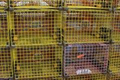 färgrika hummerblockeringar Arkivfoton