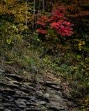 Färgrika Kentucky Royaltyfri Bild