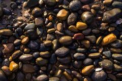 Färgrika kiselstenar på stranden i morgonsolljuset arkivfoto