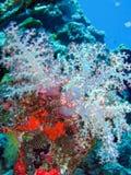 färgrika koraller Royaltyfri Foto