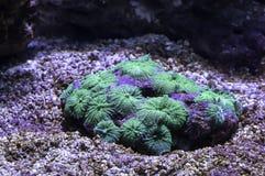 Färgrika koraller under havet i Thailand arkivfoto