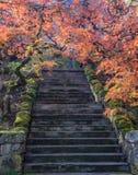 Färgrika lönnlöv längs ett flyg av trappa Royaltyfri Bild