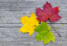 Färgrika lönnlöv på gammal träbakgrund Arkivfoton