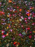 Färgrika lövrika dolda kiselstenar Royaltyfri Fotografi