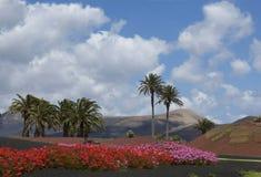 Färgrika Lanzarote Arkivfoto