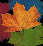 färgrika leafs Arkivfoto