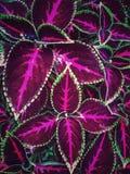 Färgrika leafs Arkivbilder