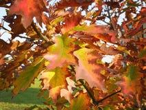 färgrika leafs för höst arkivbilder