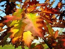 färgrika leafs för höst arkivbild