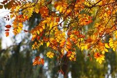 färgrika leaves arkivfoto