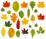 färgrika leaves Arkivbilder