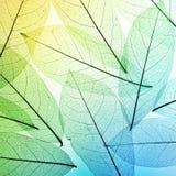 färgrika leaves för bakgrund låt vara textur fotografering för bildbyråer