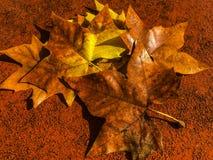 färgrika leaves för höst arkivbild