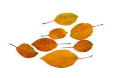 färgrika leaves för höst royaltyfria bilder