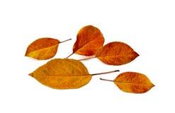 färgrika leaves för höst royaltyfri bild