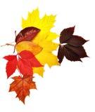 färgrika leaves för höst arkivbilder