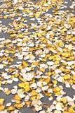 färgrika leaves för höst Royaltyfri Fotografi