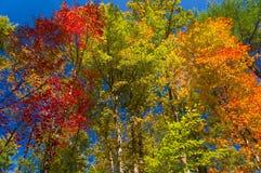 färgrika leaves för höst Royaltyfri Foto