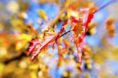 färgrika leaves för höstbakgrund Arkivfoton