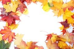 färgrika leaves för höstbakgrund Royaltyfri Bild