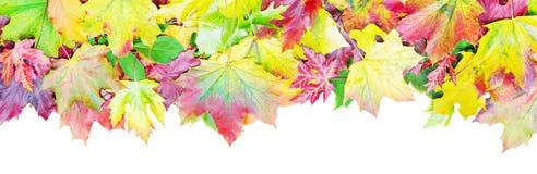 färgrika leaves för höstkant Royaltyfri Bild