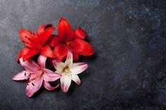 Färgrika liljablommor Fotografering för Bildbyråer