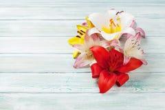 Färgrika liljablommor Royaltyfri Bild