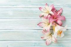 Färgrika liljablommor Royaltyfria Foton