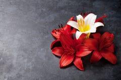 Färgrika liljablommor Royaltyfria Bilder