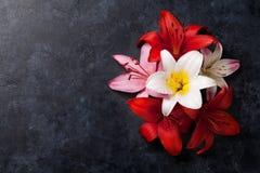 Färgrika liljablommor Arkivfoto