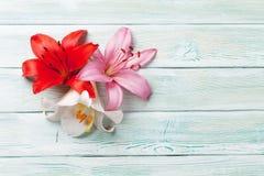 Färgrika liljablommor Royaltyfri Fotografi