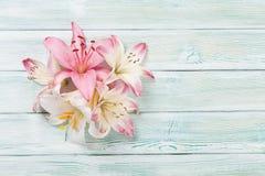 Färgrika liljablommor Arkivbild
