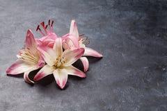 Färgrika liljablommor Arkivfoton