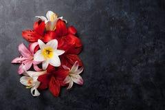 Färgrika liljablommor Royaltyfri Foto