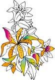 färgrika liljar Arkivbilder