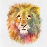 F?rgrika Lion Head Drawn p? papper royaltyfri illustrationer