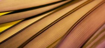 Färgrika ljus och abstrakta former bladet arkivfoto